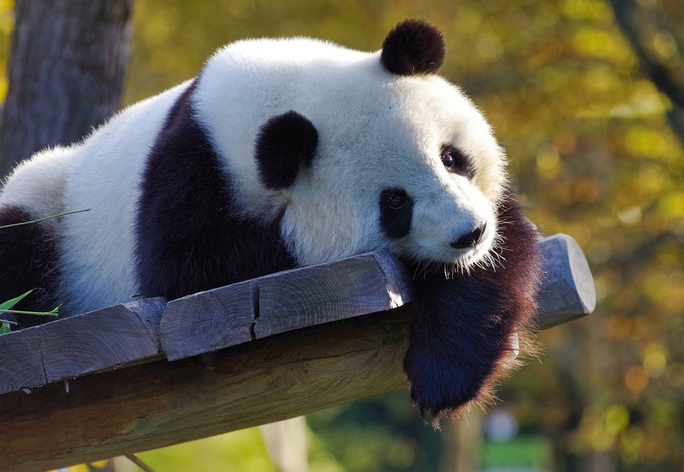 GOOGLE PANDA 4.1 – THE GOOD, THE BAD AND THE PENALTY!